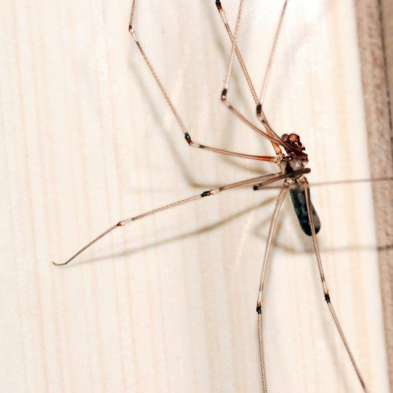 Spiders, Pest Control in Seven Kings, Goodmayes, IG3. Call Now! 020 8166 9746